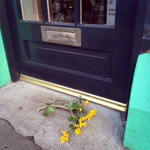 Yellow Mayflowers at threshold of Gilmartin's Craft Shop, Belleek